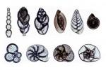 Artystyczne formy mikroskopowego świata.