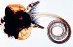 Owady: Neuroptera, Lepidoptera - zestaw 10 preparatów