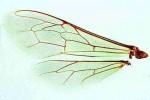 Owady: Hymenoptera, Coleoptera - zestaw 15 preparatów
